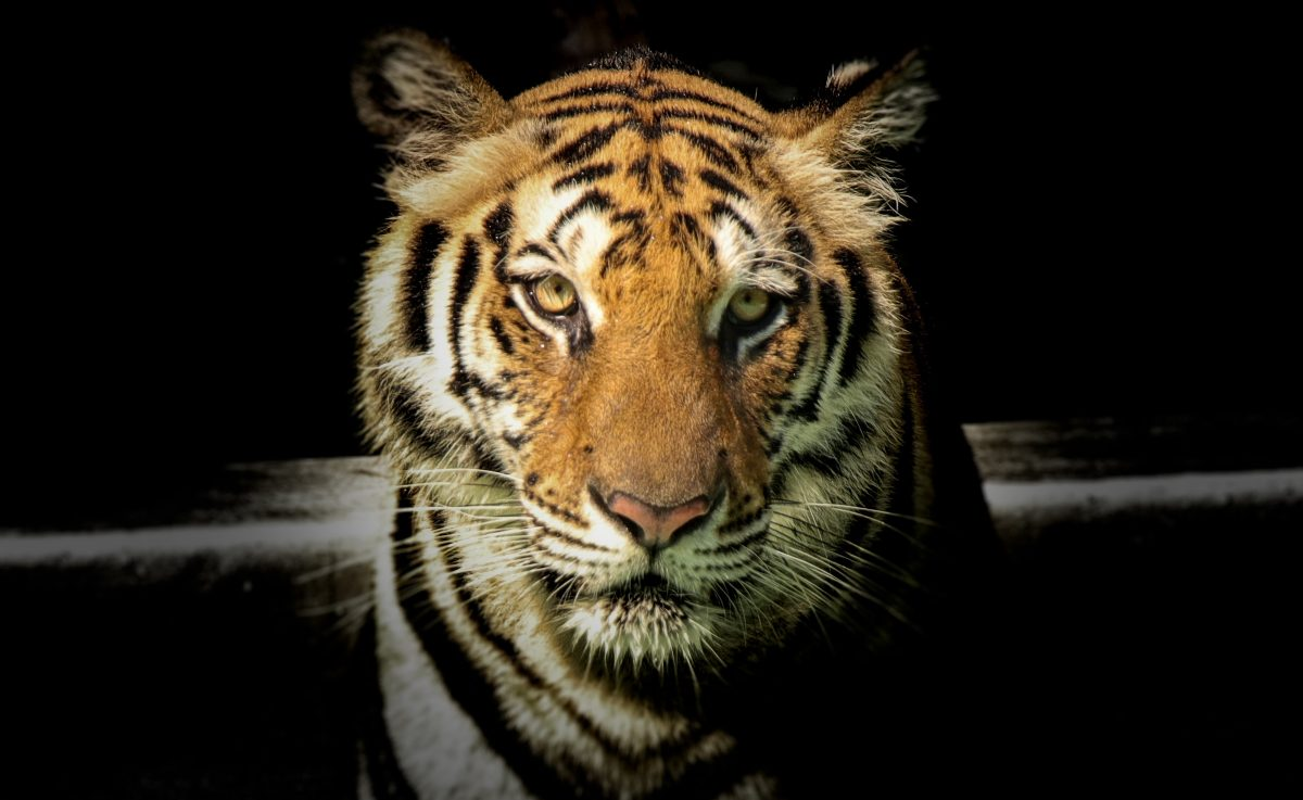 TIGER TRAILS OF CENTRAL INDIA